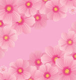 Pink cosmos flowers borders Royalty Free Stock Photo