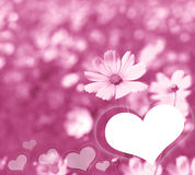 Pink cosmos flowers and heart in soft color style for romantic b Royalty Free Stock Images