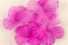 Pink cotton petals Royalty Free Stock Photos