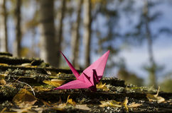 Pink crane in wood Royalty Free Stock Photos