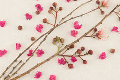 Pink crape myrtle flowers with branch. Background royalty free stock photography
