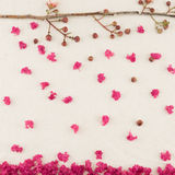Pink crape myrtle flowers with branch. And falling petals background royalty free stock photo