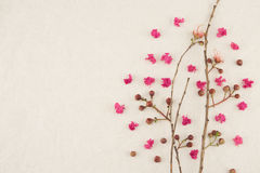 Pink crape myrtle petals with brown branches. With copy space stock photography