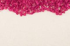 Pink crape myrtle petals Stock Image