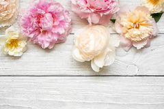 Pink and creamy peony flowers with roses on white wooden background. flat lay. top view with copy space Royalty Free Stock Photos