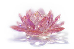 Pink Crystal Lotus Stock Photography