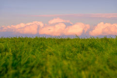 Pink Cumulus Royalty Free Stock Photos
