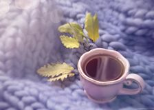 Pink cup of tea. And wool blanket royalty free stock photo