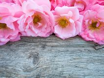 Pink curly roses on the old wooden board Stock Photos