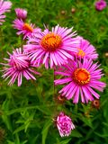 Pink Cute Flowers stock image