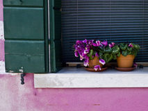Pink cyclamen. On the balcony Royalty Free Stock Image
