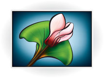 Pink Cyclamen Flower Royalty Free Stock Image
