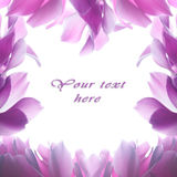 Pink cyclamen flower Royalty Free Stock Photos