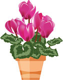 Pink cyclamen in a flower pot. Isolated on a white background, vector illustration stock illustration