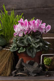 Pink cyclamen and two hyacinth Stock Photo