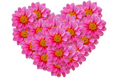Pink dahilia flowers heart. Stock Photos