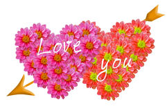 Pink dahilia flowers heart. Stock Photos