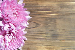 Pink Dahlia Background Rustic Wood. Two pink dahlia flowers on a rustic wood background, perfect wedding floral frame for country summer outdoor theme Stock Image