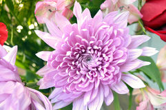 Pink dahlia flower. In a bouquet of green. Pretty summer wedding flower Stock Photo