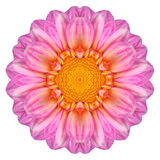 Pink Dahlia Flower Kaleidoscope Isolated on White Stock Photo