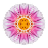 Pink Dahlia Flower Kaleidoscope Isolated on White Stock Photos