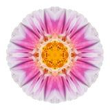Pink Dahlia Flower Kaleidoscope Isolated on White Stock Photos