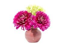 Pink Dahlia flower in vase Stock Photos