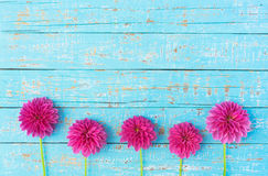 Pink Dahlia Flowers. Beautiful pink dahlia flowers border on light blue wooden background with copy space Royalty Free Stock Images