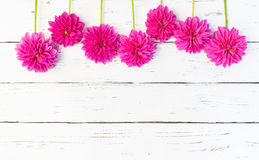 Pink Dahlia Flowers Border Stock Photo
