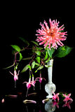 Pink dahlia with fuchsias. Royalty Free Stock Images