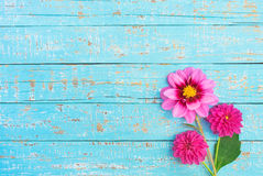 Pink Dahlia Summer Flowers Bouquet Royalty Free Stock Image