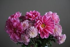 Pink dahlias with yellow centre and chrysanthemum flowers. Detailed view of a bunch of pink dahlias flowers with yellow centre and pink  chrysanthemums on a grey Stock Photo