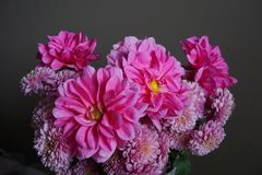 Pink dahlias with yellow centre and chrysanthemum flowers. Detailed view of a bunch of pink dahlias flowers with yellow centre and pink  chrysanthemums on a grey Royalty Free Stock Images