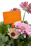 Pink Daisies with Blank Orange Sign Stock Photos