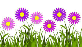 Pink daisies border Stock Images