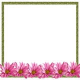 Pink Daisies Border on White. Row of pink daisies on white background, green border, for scrapbook, card, stationery stock photo