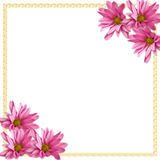 Pink Daisies Corner Border on White. Corner of pink daisies on white background, beige border, for scrapbook, card, stationery stock photography