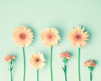 Pink daisies over mint Stock Image