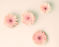 Pink daisies over pastel Stock Photo