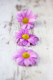 Pink daisies on rustic wooden background Royalty Free Stock Photo