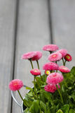 Pink daisies on wooden table Stock Photography