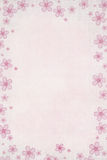 Pink Daisy Royalty Free Stock Photography