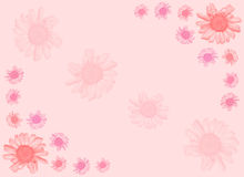 Pink Daisy background. Royalty Free Stock Photos