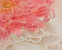 Pink Daisy in Bubbles. Beautiful pink daisy drenched in bubbles royalty free stock photo