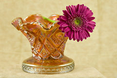 Pink daisy in carnival glass vase Stock Photos