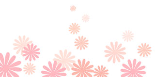Pink daisy flowers background Stock Image