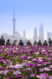 Pink daisy flowers, People watching Shanghai skyline Royalty Free Stock Photography