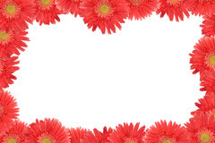 Pink daisy frame Stock Photos