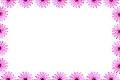 Pink Daisy Frame Stock Images
