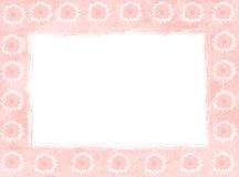 Pink daisy frames Stock Photo